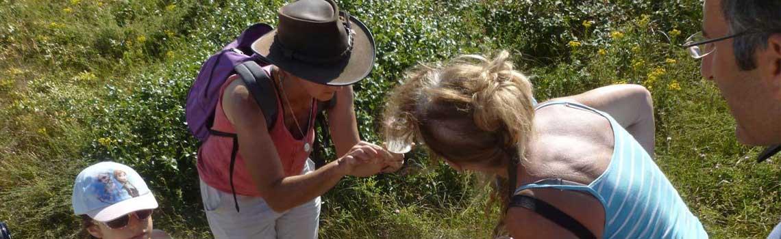 À Vairé - Insectes à vue