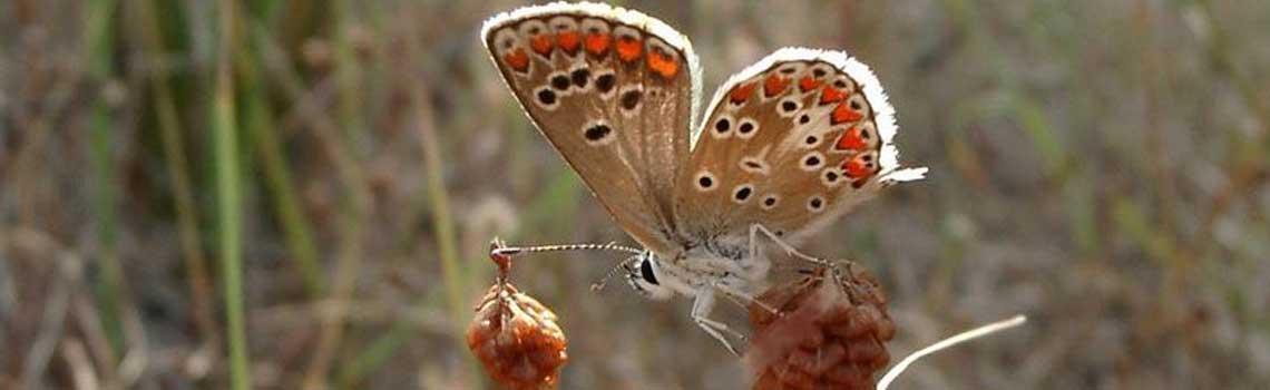 À l'Ile d'Olonne - Insectes à vue