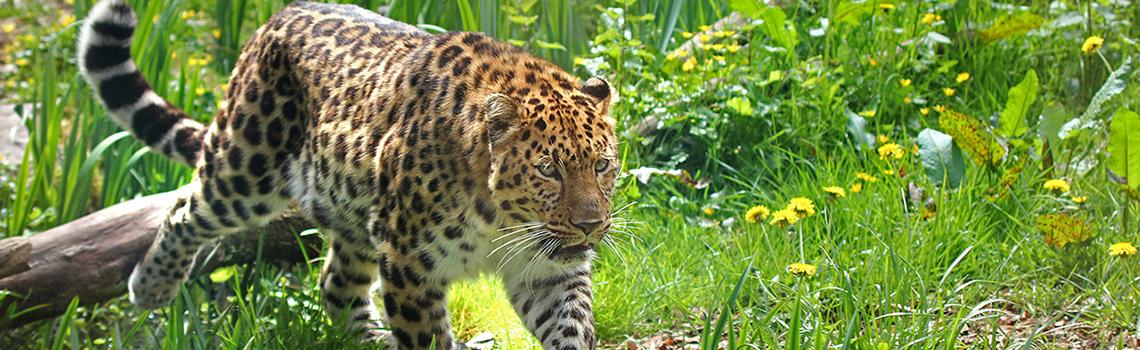 Zoo des Sables