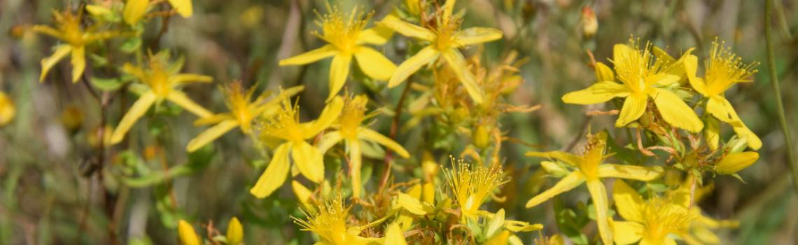PNP - Les plantes du marais