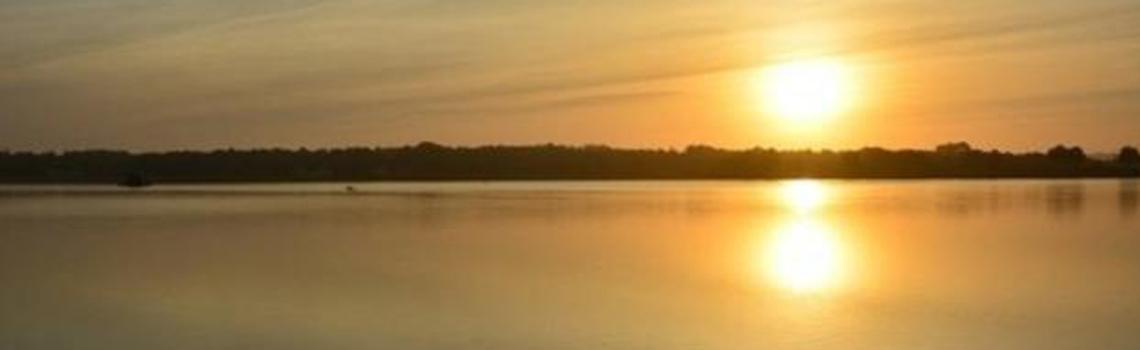 PNP - Le réveil du marais